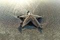 在海 的海星 库存图片