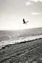 在海 的海鸥 库存照片