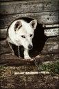 在狗屋的狗 免版税库存照片