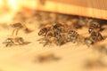 在蜂房的生 图库摄影