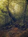 夏时在森林里 免版税库存照片