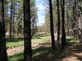 干燥小河 通过树 库存图片