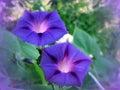 开花蓝色野生植物 库存照片