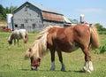 微型农厂的马 免版税库存照片