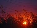 日落的森林 北自然的风景 免版税库存图片