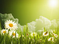 明亮的夏天下午 免版税库存图片