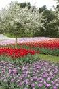 春天花和果树 图库摄影