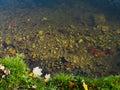有排 设备的美丽的河 库存图片