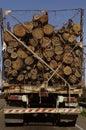 有树干的卡车 库存照片