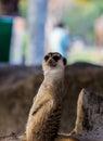 梅厄cats in动物园 色动物园,泰国 在动物园里 库存图片