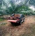 棕榈油农场 库存照片