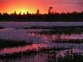 森林和nadym河日落的 n的风景 免版税库存照片