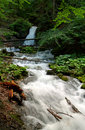 森林风景小的瀑布 免版税库存图片