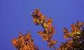 橙色叶子 免版税库存照片