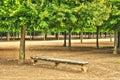 法国,在凡尔赛pa parc的玛丽 安托瓦内特庄园 免版税图库摄影