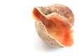 海壳宏观视图纹理 免版税图库摄影