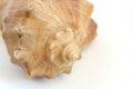 海壳宏观视图纹理 免版税库存图片