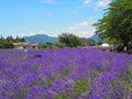 淡 色在川口湖边的yagisaki公园 免版税图库摄影