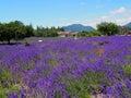 淡 色在川口湖边的yagisaki公园 免版税库存图片