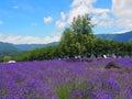 淡 色在川口湖边的yagisaki公园 图库摄影