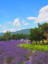淡 色在川口湖边的yagisaki公园 免版税库存照片