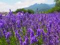 淡 色在川口湖边的yagisaki公园 库存图片