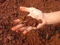 潮湿土壤 免版税库存照片