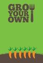 生长您自己的poster carrots 库存照片