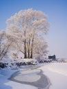 用釉盖的树 免版税库存照片