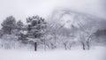 用雪盖的树 免版税库存照片