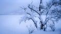 用雪盖的树 库存图片