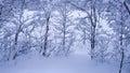 用雪盖的树 图库摄影