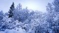 用雪盖的树 库存照片