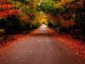 秋天公园路 库存图片