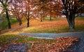 秋天公园 库存图片