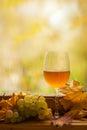 秋天白葡萄酒 库存照片