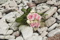 空白花束桃红色的玫瑰 免版税图库摄影