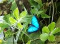 美丽的 蝶 免版税库存图片