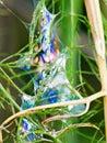 自然彩虹 软泥足迹在 香植物中,但是呈虹彩 免版税库存照片