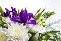 花束空白菊花的虹膜 库存照片