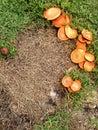 蘑菇圆环 图库摄影