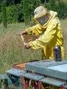 蜂业 检查蜂房 图库摄影