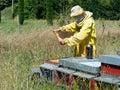 蜂农在工作 检查蜂房 韩的吸烟者 免版税库存图片