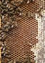 蜂箱 节 蜂,蜂蜜, 胞,蜡  蜂 免版税库存图片