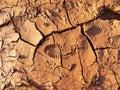 裂的 土地面背景 免版税库存照片