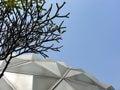 赤 馨花和 璃温室屋顶 免版税库存照片