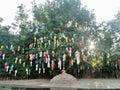 阳光通过垂悬在寺庙的树的五颜六色的纸灯 图库摄影