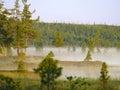 雾森林杉木 北自然的风景 库存图片