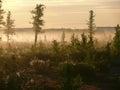 雾的森林 北自然的风景 的treadled 免版税库存图片