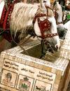 马喝 库存图片